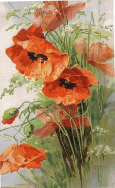 POPPIES BY CATHERINE KLEIN