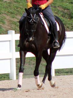 """12 Riding Quick Tips – #11: Do A """"Beginner Bend"""" – Horse Listening"""