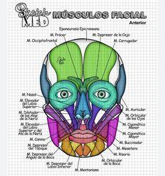 No hay descripción de la foto disponible. Human Anatomy Art, Anatomy Study, Medical Memes, Medical Science, Med Student, Student Studying, Medical Students, Medical School, Medical Drawings