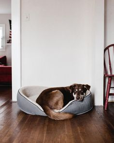 TFW you just dont want to get out of bed. Animal Nutrition, Getting Out Of Bed, Go To Sleep, Pet Shop, Dog Toys, Puppy Love, Dog Food Recipes, Dogs And Puppies, Pet Supplies