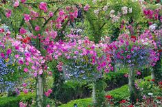 A large garden with a series of incredible hanging flowers from trees in the midst of a large garden. Balcony Flower Box, Hanging Flower Baskets, Hanging Planters, Hanging Gardens, Large Garden Planters, Flower Planters, Garden Pots, Garden Ideas, Flower Containers