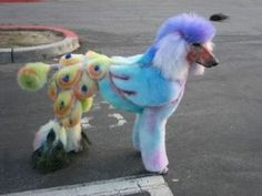 No no no.... when are people going to stop messing with Poodles and just let them be natural.