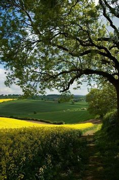 new ideas british landscape photography english countryside Beautiful World, Beautiful Places, Country Life, Country Roads, Country Charm, Country Living, Landscape Photography, Nature Photography, British Countryside