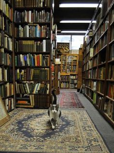 Real librarian. Books and a cat...all I need now is a hot cup of tea!