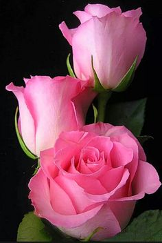 The Best Pink Flowers for Your Lovely Garden Learn about types of pink flowers and see pink flower images to help you find your perfect plant.Learn about types of pink flowers and see pink flower images to help you find your perfect plant. Beautiful Pink Roses, Amazing Flowers, Pretty Flowers, Light Pink Flowers, Pink Rose Flower, Beautiful Flowers Garden, Flower Backgrounds, Flower Wallpaper, Nature Wallpaper