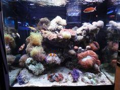 30 gallon saltwater aquarium