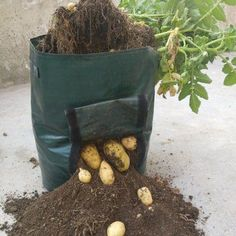 Free Shipping 50L Large Capacity Potato Grow Planter PE Container Bag Pouch Tomato Window Garden