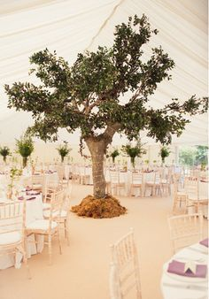 Indoor trees are a really stunning feature and create such an impact, moreso than small flower arrangements.