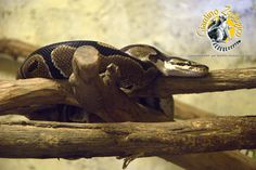 #rettile @Tanja Kušej Giardino Zoologico di Pistoia