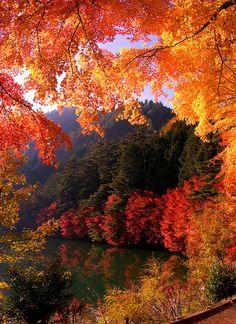 gateway to autumn…. by ninjazz