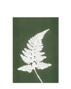 Print Fern white