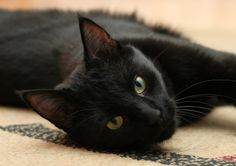 Cat - Wojciech Malczewski A very beautiful black cat.