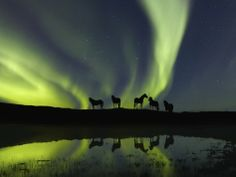 Horses under the Aurora Borealis Photographic Print