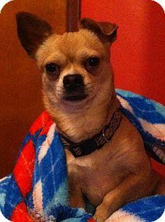 Rescue Dogs For Adoption Dallas Tx