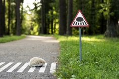 """""""I saw a hedgehog passing through street and it was so dark...So I decided to make a road sign in VIngis Park, [a famous] park in Vilnius"""". -- Martynas Karpovicius"""