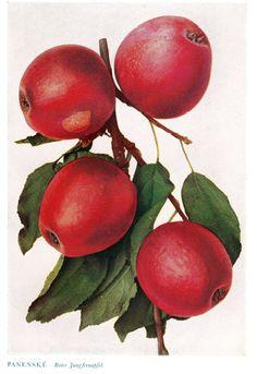 Apples, Fruit, Vegetables, The Fruit, Vegetable Recipes, Apple