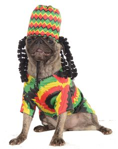 The Medium Rasta Dog Costume is more than just a costume- it's a way of life! Your dog will look stellar in this colorful costume with a unique ensemble that features a colorful shirt with a dynamic pattern and a complementary hat. Pet Halloween Costumes, Pet Costumes, Halloween Snacks, Animal Costumes, Costume Ideas, Halloween Items, Couple Halloween, Halloween Season, Halloween Cosplay