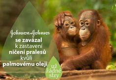 SKVĚLÁ ZPRÁVA! Johnson & Johnson se zavázal k zastavení ničení pralesů kvůli palmovému oleji! SDÍLEJTE... STAŇTE SE STRÁŽCI PRALESŮ a přesvědčte další firmy  ►►► www.bit.ly/1g27zw0