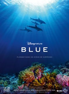 Blue (US, 2018 / English title: Dolphins) An intimate look at dolphins, their friends the baleen whales, their enemies the killer wales, and various players in their underwater world: the cuttlefish, the harlequin shrimp, while Blue the baby dolphin learns to make sense of it all and how to survive. This is a visually spectacular and enlightening Disney nature documentary. 3.3 stars