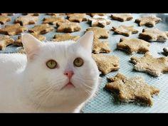 GALLETAS para GATOS y PERROS - Receta fácil de ATUN ♥♥ Golosinas caseras perros y gatos - YouTube