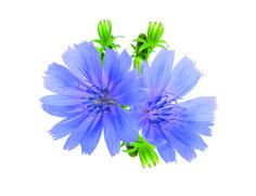 Bylinky na žlučník a játra   Flóra na zahradě Flora, Herbs, Plants, Herb, Plant, Planets, Medicinal Plants