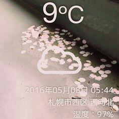 今日は風が強いそうですよベランダに桜の花弁が溜まってましためんこいから今日は掃除しないでそのままにしておこう  #instaweather #instaphoto