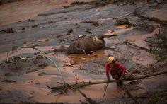 8/11 - Bombeiros trabalham na busca por vítimas no distrito de Bento Rodrigues, em Mariana - MG