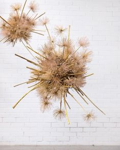 One last sculpture before we leave! has been creating these studies lately using dried agapanthus. Floral Centerpieces, Floral Arrangements, Wheat Wedding, Flower Installation, Wall Installation, Flower Window, Dry Plants, Floral Backdrop, Boho Wedding Decorations