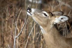 Deer Hunting: How to Make a Homemade Cover Scent | Outdoor Life