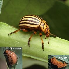 12 Worst Vegetable Garden Pests  How to Take Back Your Garden Without Using Chemicals