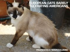 Unpublished Coffee Table Books: European CatEdition