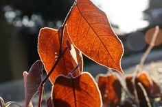 Blätter im Morgenlicht