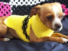 RAOK Dog Sweater Pattern Photo:  This Photo was uploaded by tallennl. Find other RAOK Dog Sweater Pattern pictures and photos or upload your own with Pho...