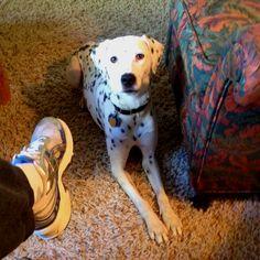 Spotty makes me walk.