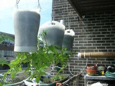 How To Build An Upside Down Self Watering Planter   -- found on http://www.apartmenttherapy.com/la/diy/how-to-build-an-upside-down-self-watering-planter--113142