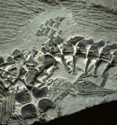 Ancient reptile birth preserved in fossil