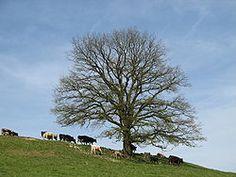 """Laufey (""""løv ø"""") eller Nal (""""nål"""") var i nordisk mytologi Farbautes mage og moder til Loke, Byleist og Helblinde.  Hendes navn betyder """"løv ø"""" hvilke er en kenning (poetisk omskrivning) for et træ. Den norske ø Lauer er opkaldt efter hende. https://sv.wikipedia.org/wiki/Tr%C3%A4d  Farbaute, (Oldnordisk: Fárbauti), (""""som slår hårdt""""), er en jætte fra nordisk mytologi.  Han er med Laufey fader til Loke, Byleist og Helblindi.  Farbaute (""""den som slår häftigt"""") var en storm/åskjätte i nordisk…"""