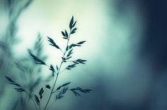 Sleep to Dream. by CarolynsHope