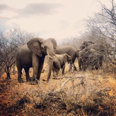 Amazing South-Africa Krugerpark Safari.