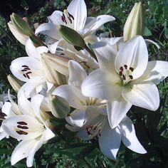 flower2013