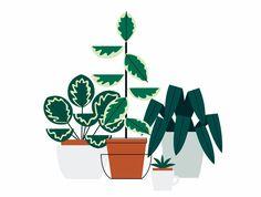 - - NEW - - House plants - - - - Sarah Abbott - - -