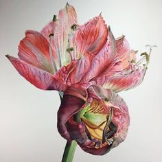 Contemporary botanical painting by Victoria Braithwaite. Botanical Drawings, Botanical Illustration, Botanical Prints, Watercolor Illustration, Watercolor Cards, Watercolor Flowers, Flower Drawing Tutorials, Drawing Flowers, Open Art