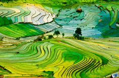 Terrace farming has been a way to turn steep terrain into productive agricultural land. It also creates stunning landscapes.
