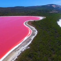 How Australia's Lake Hillier gets its pink color - The Halobacteria is known to produce red pigments which when mixed with salt-tolerant Dunaliella Salina, creates a stunning strawberry milkshake color. Visit Australia, Australia Travel, Western Australia, Pink Lake Australia, Brisbane Australia, Lake Hillier Australia, Beautiful Places To Travel, Cool Places To Visit, Australia Occidental