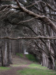 Google Image Result for http://images.fineartamerica.com/images-medium/moss-beach-trees-4191-karen-w-meyer.jpg
