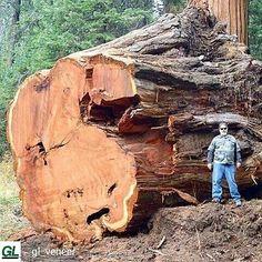 """4,320 Me gusta, 77 comentarios - Woodworking Art (@woodwork_art) en Instagram: """"#woodwork #wooden #wooddesign #wood #woodworking #carving #doors #Barrels #reclaimedwood #handmade…"""""""