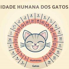 Idade humana dos gatos