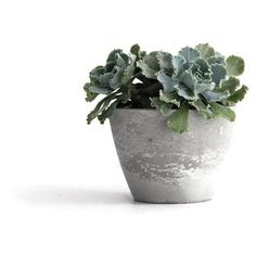 frae and co. Modern Concrete Planter, Bowl Grey By (110 CNY) ❤ liked on Polyvore featuring home, outdoors, outdoor decor, outdoor lawn & garden, outdoor patio decor, grey bowl, outdoor garden decor and modern garden decor