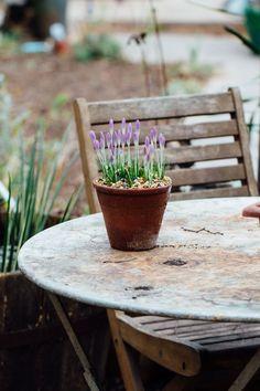 Garden Works, Flower Farmer, Brown House, Garden Makeover, Farmhouse Garden, Garden Bulbs, Nature Table, Picture Postcards, Spring Blooms