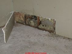 How We Survived Toxic Black Mold Exposure - Remove Black Mold